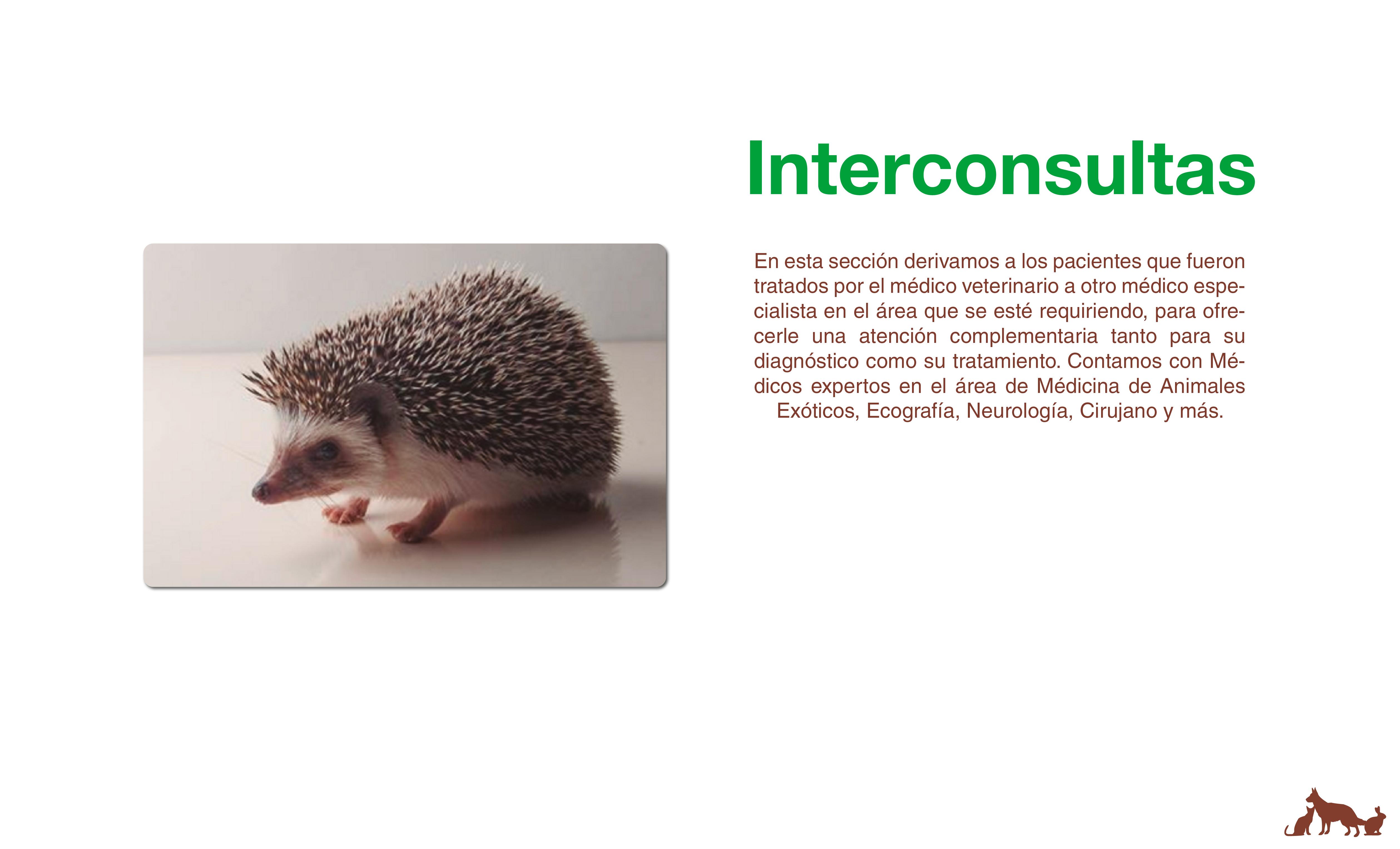 interconsultas