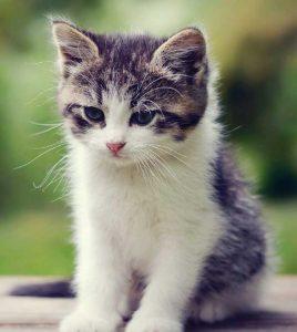 cal-gato-1