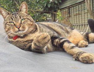 cal-gato-2