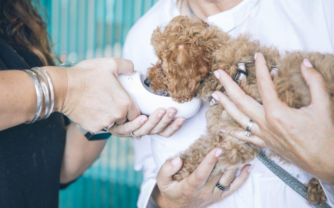 Tenencia responsable de Mascotas, esterilización